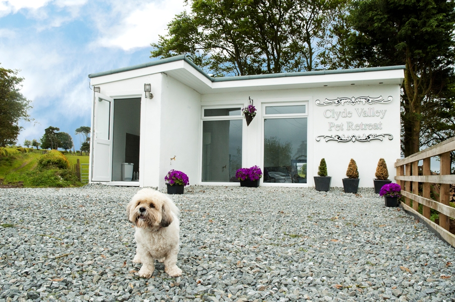 Luxury boarding kennels clyde valley pet retreat scotland for What is dog boarding