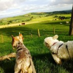 Scruffy and Ziggy admiring the view