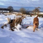 Hector & Lucy havng fun in the snow