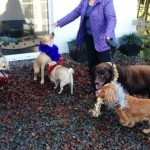 Layla, Lucy, Mungo, Bracken & Kopper on Christmas Day 2013