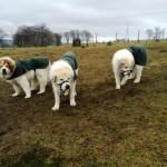 Annie, Digby & Cara