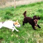 Benji & Barney playing tag!
