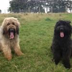 Olliei & Paddy
