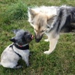 Mist & Layla