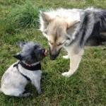 Rocky & Layla