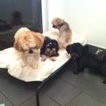 Taffy, Neto, Hamish & Murphy