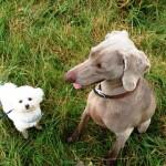 Ollie & Kyte