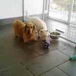 Sacha & Sammy