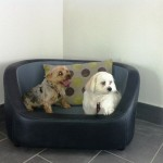 Scruffy and Ziggy our first ever guests for gallery