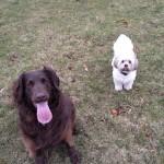 Suri & Mitzy