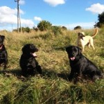 Treacle, Cola, Roxy & Lucy